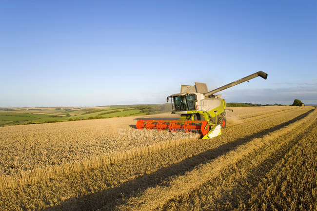 Combine harvesting wheat in sunny rural field — Stock Photo