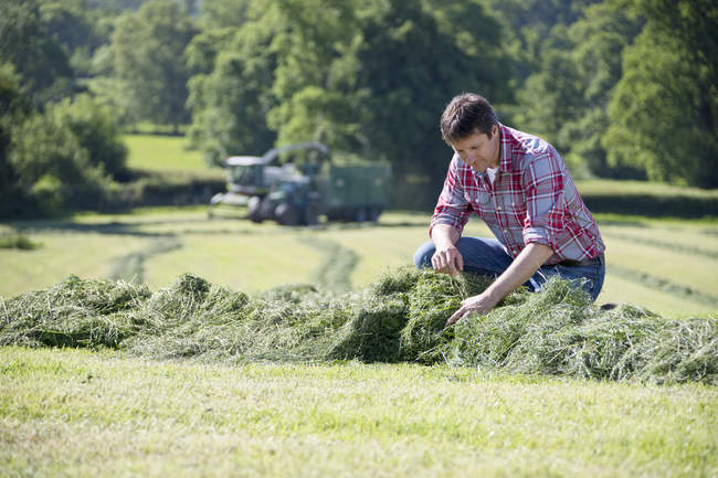 Farmer checking silage grass crop in field — Stock Photo