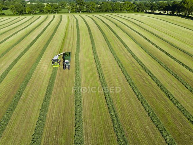 Vue aérienne d'ensileuses coupe herbe ensilage récolte dans le champ et le remplissage de semi-remorque — Photo de stock