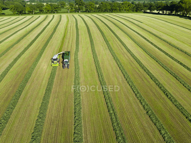 Aerial view of forage harvester cutting grass silage crop in field and filling tractor trailer — Stock Photo