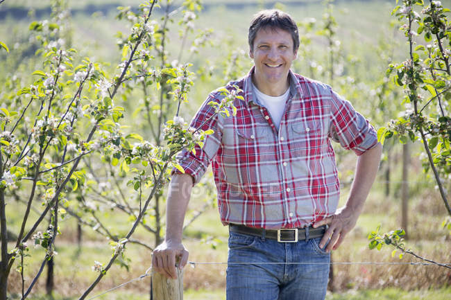 Farmer checking cider apple trees in orchard and smiling at camera — Stock Photo