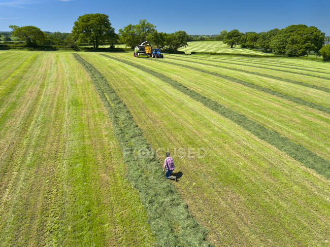 Vista aerea della mietitrice taglio erba insilato foraggio in campo e rimorchio del trattore di riempimento mentre coltivatore orologi — Foto stock