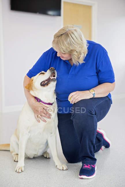 Лабрадор собака з ветеринаром в хірургії — стокове фото