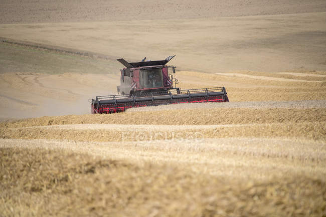 Harvest view of combine harvester cutting summer wheat field crop on farm — Stock Photo