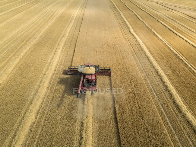 Harvest aerial overhead of combine harvester cutting summer barley field crop on farm — Stock Photo