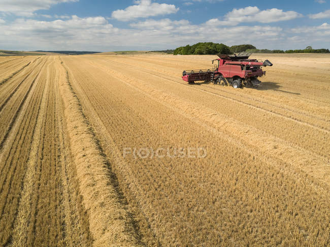 Harvest aerial of combine harvester cutting summer barley field crop under blue sky on farm — Stock Photo