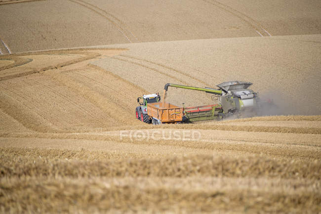 Harvest view of combine harvester cutting summer wheat field crop and tractor trailer on farm — Stock Photo