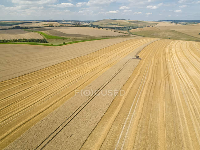 Harvest aerial landscape of combine harvester cutting summer wheat field crop on farm — Stock Photo