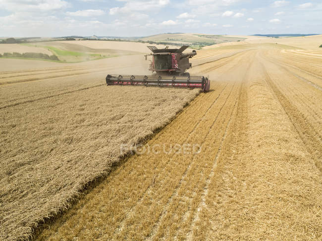 Harvest aerial overhead of combine harvester cutting summer wheat field crop on farm — Stock Photo