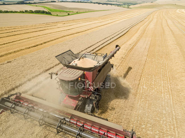 Harvest aerial landscape of combine harvester cutting summer wheat field crop with tractor trailer and blue sky on farm — Stock Photo