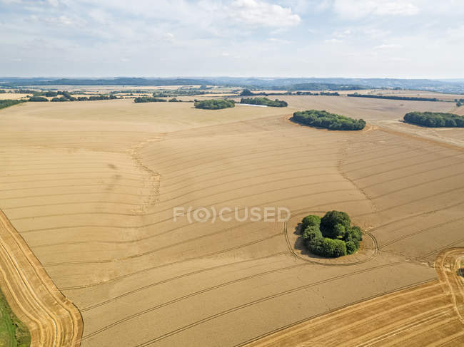 Aerial landscape of summer farm wheat and barley field harvest crops — Stock Photo