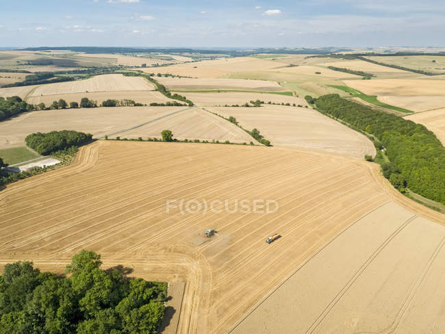 Harvest aerial landscape of combine harvester cutting summer wheat field crop and tractor trailer on farm — Stock Photo