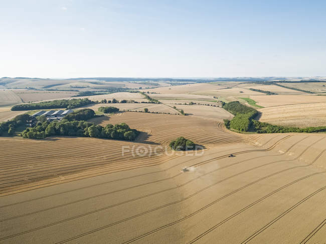 Harvest aerial farm landscape of combine harvester cutting summer wheat field crop with tractor trailer under blue sky — Stock Photo