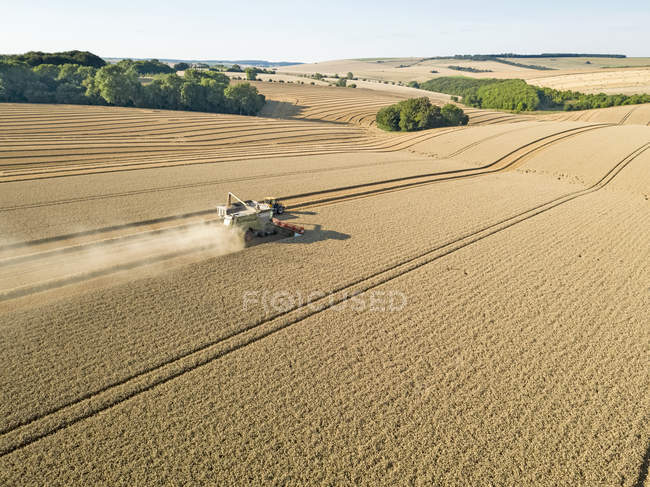 Harvest aerial combine harvester cutting summer wheat field farm crop with tractor trailer — Stock Photo