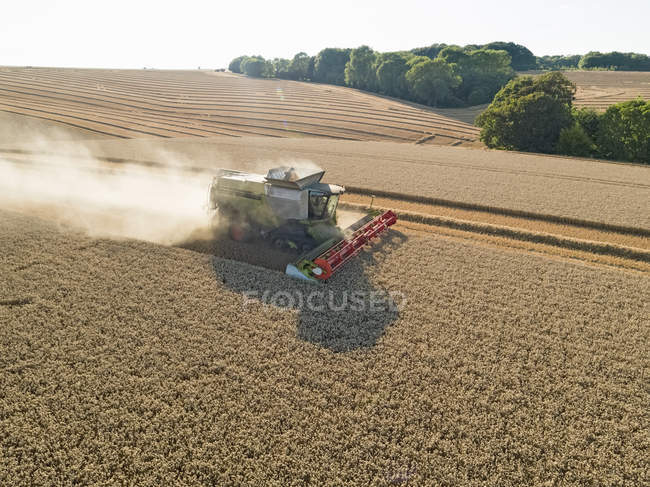 Harvest aerial combine harvester and summer wheat field farm crop — Stock Photo