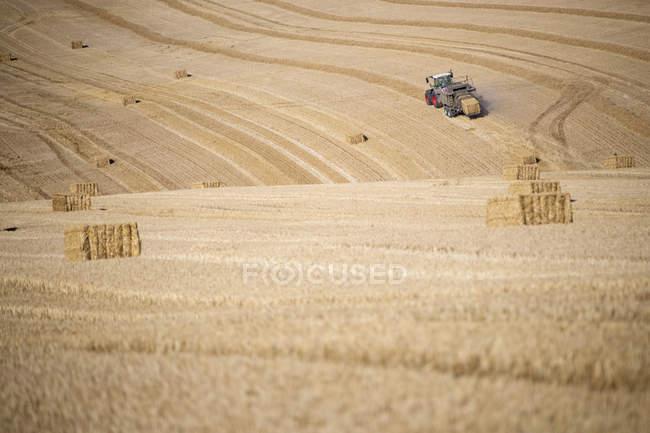 Balle di paglia che fare pressa trattore nei campi dopo estate grano raccolgono in fattoria — Foto stock