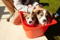 Dois cachorros sentados na caixa — Fotografia de Stock