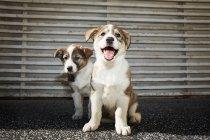 Little puppies sitting on street — Stock Photo