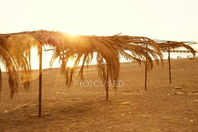 Пальмові дерева на березі моря — стокове фото