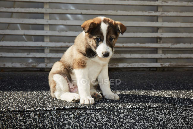 Puppy with sitting on street — Stock Photo