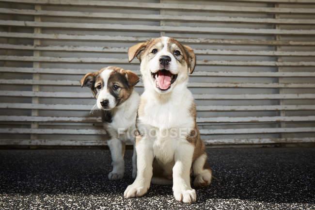 Pequeños cachorros sentados en la calle - foto de stock