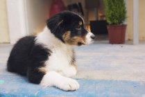 Милая собака, лежащая на полу снаружи — стоковое фото