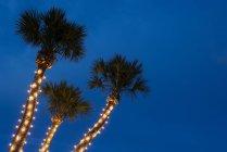 Palmeras decoradas con luces de Navidad - foto de stock