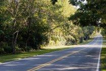 Пустой проселочной дороги через лес — стоковое фото