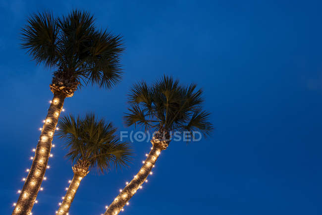 palm trees decorated with christmas lights stock photo