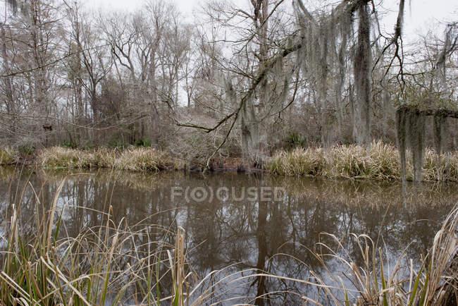 Спокойное озеро в лесу в дневное время — стоковое фото