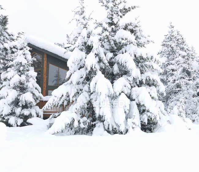 Альпийский дом в лесу после падения снега — стоковое фото