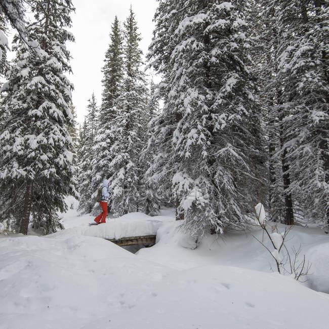 Лыжница снежном лесу — стоковое фото