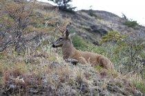 Олень животное с рогами в естественной среде обитания сбоку — стоковое фото