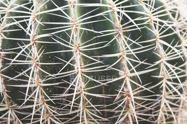 Planta de cactus de primer plano - foto de stock