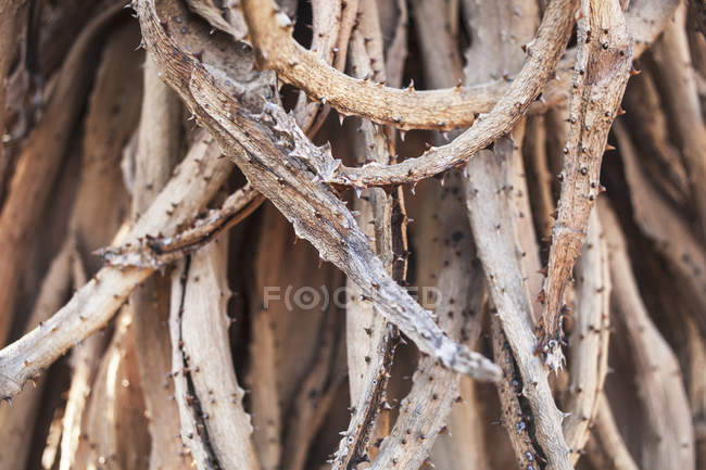 Twisted dried brunches — Stock Photo