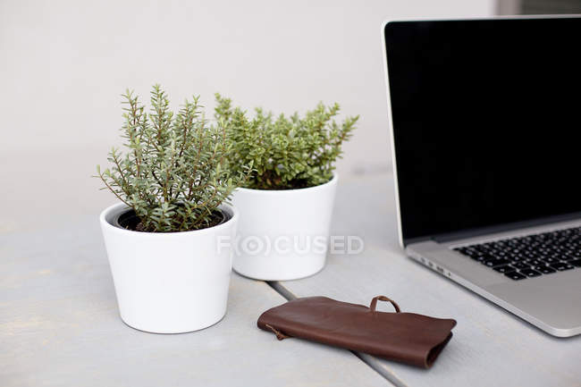 Laptop and plants in pots on desk — Stock Photo