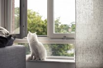Weiße indoor Katze sitzt auf der Fensterbank — Stockfoto