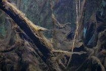 Madera bajo el agua con algas - foto de stock