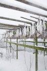 В'яленої висить на дерев'яному каркасі — стокове фото