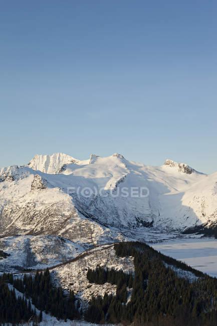 Foresta e montagne coperte di neve — Foto stock