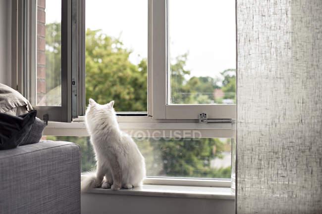 Белый крытый кот сидит на подоконнике — стоковое фото