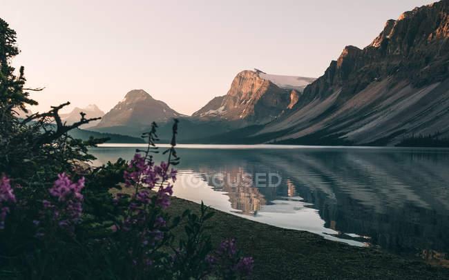 Квітучі рослини на березі озера лук на захід сонця, Альберта, Канада — стокове фото