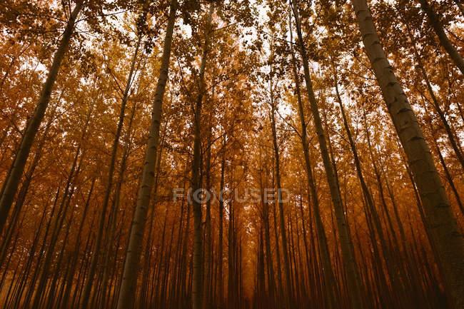 Pendant la journée vue brumeuse forêt automnale — Photo de stock