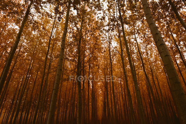 Daytime view of misty autumnal forest — Stock Photo