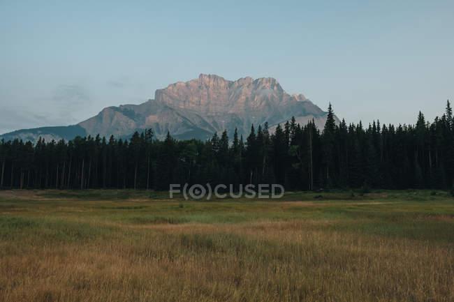 Vista di giorno delle montagne sopra il bosco e prato — Foto stock