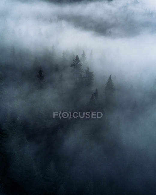 Daytime elevated view of dark and misty mountain forest — Stock Photo