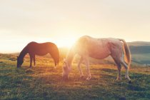 На полонину пасущихся лошадей — стоковое фото