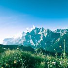 Alpine landscape with flowers — Stock Photo