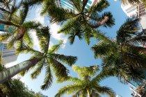 Пальмы в центре города — стоковое фото