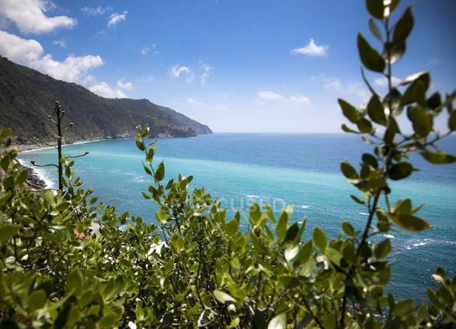 Grüne Pflanzen vor dem Hintergrund der Küste — Stockfoto